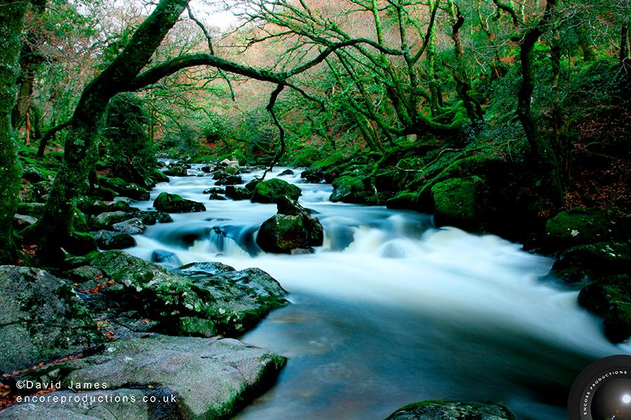 Dewerstone Woods, Dartmoor