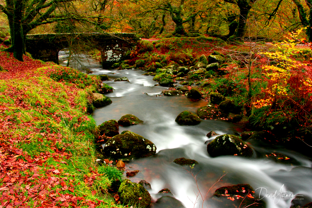 Autumn, Burrator Reservoir, Dartmoor