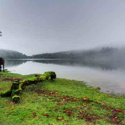 Burrator Reservoir, Dartmoor