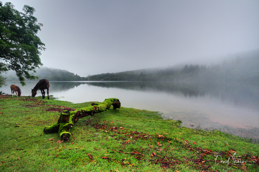 Fog, Burrator Reservoir