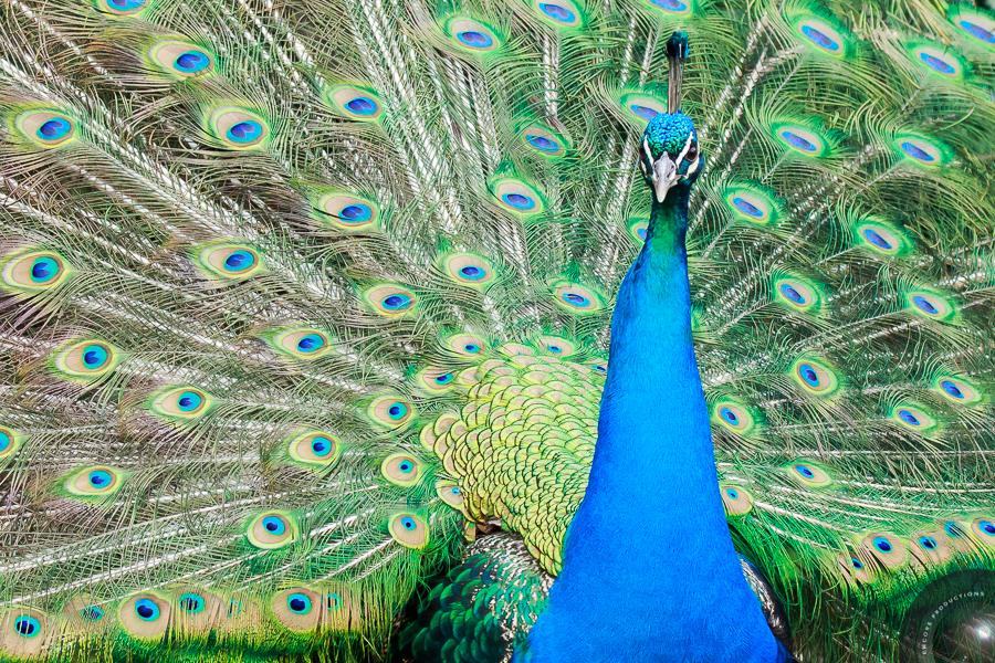 Wildlife Photography - Dartmoor Zoo