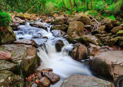 Shaugh Woods, Dartmoor