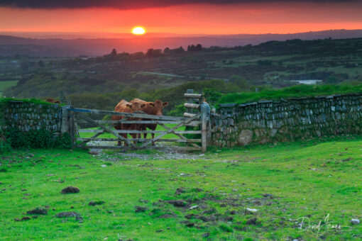 Sunset, Dartmoor National Park