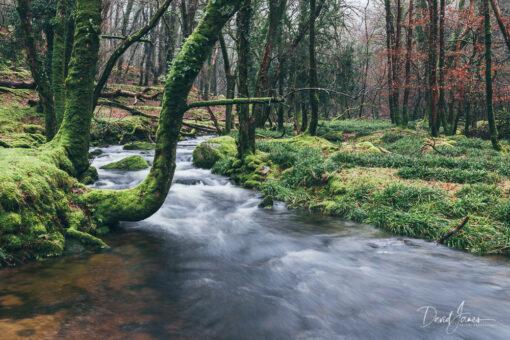 River Meavy, Dartmoor