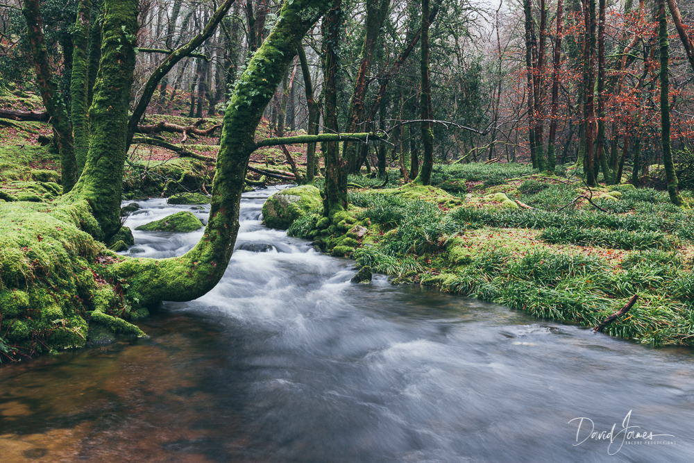 River Meavy, Dartmoor
